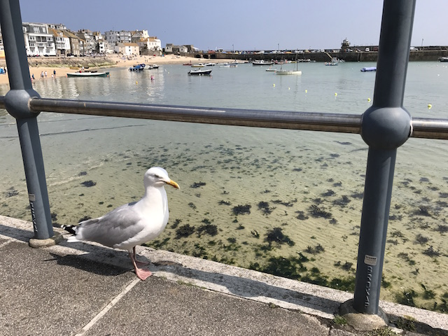 All The Stations: seagull at St Ives